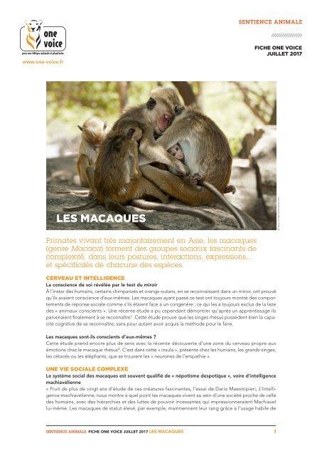Fiche Macaque