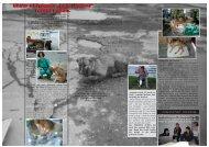 """Unser Hilfsfonds """"Leid lindern"""" rettet Leben. Unser ... - Tierhilfe Süden"""