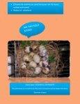 Huevo de codorniz - Page 2