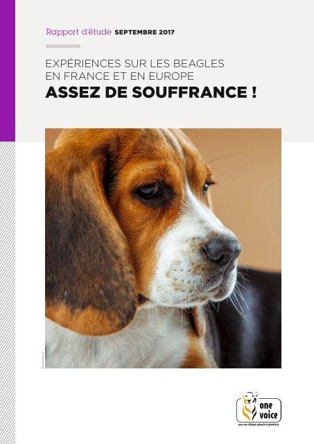Rapport Beagles