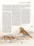 DAS MAGAZIN ZUR VOGEL- UND NATURBEOBACHTUNG - Seite 7