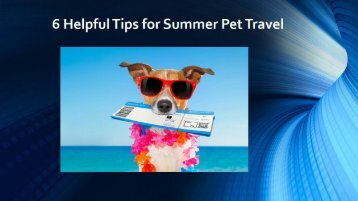 6 Helpful Tips for Summer Pet Travel