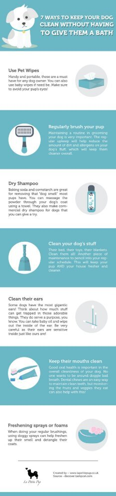 7 Ways To Keep Your Dog Clean Without Giving Them A Bath