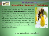 professional bee removals in Miami