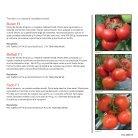 Brochure Tomato Romania 2017 - Page 3