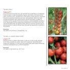 Brochure Tomato Romania 2017 - Page 5