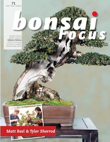 BonsaFocuN71_downmagaz.com