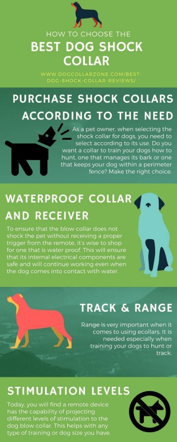 How to Choose the Best Dog Shock Collars