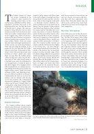 Der Falke - Griffon vultures Croatia - Page 2