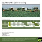 Cauliflower for October sowing - Page 2