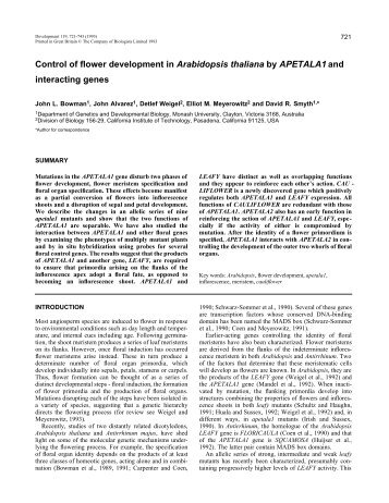 Control of flower development in Arabidopsis thaliana by APETALA1 ...
