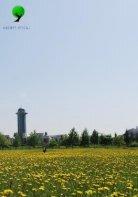 Sabancı Üniversitesi Bitki Kataloğu - Page 2