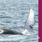 Guía ballenas - Page 7