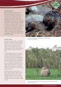 Short-beaked Echidnas - SEQ Catchments - Page 3