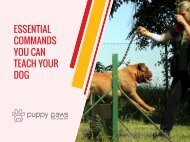 Essential Commands You Can Teach Your Dog