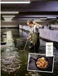 Die Good Gamba im Manager Magazin 09-17 - Seite 3