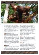 PapuaBorneoBali3 - Page 4