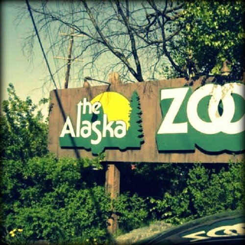 Alaska Zoo 7 9 miles to the south of the best Anchorage