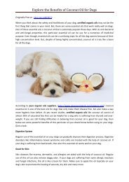 Explore the Benefits of Coconut Oil for Dogs