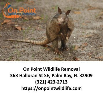 On Point Wildlife Removal - Melbourne FL