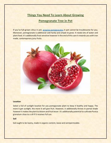 Things You Need To Learn About Growing Pomegranate Tree in Pot