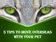 5 Tips to Move Overseas with Your Pet