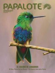 Revista Papalote Edición 15