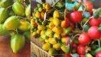 Receitas com fruto da pupunheira - Page 6