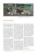 Samtpfote Herbst/Winter 2017 - Page 4