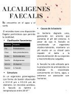 MICROORGANISMOS ASESINOS - Page 7