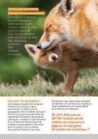 La paix pour les renards ! - Page 2