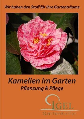 kamelien a - Igel Gartenkultur