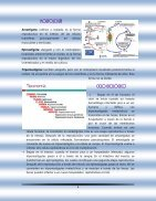 Principales microorganismos que invaden al hombre - Page 6