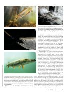 scientificamerican1117-42 - Page 4