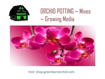 Buy Online Orchid Mixes for Your Orchids in Florida