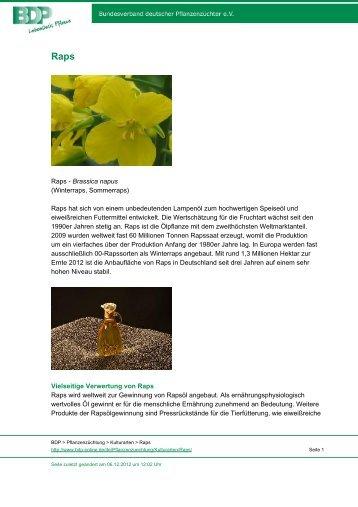 Raps - Brassica napus (Winterraps, Sommerraps) Raps hat sich von ...