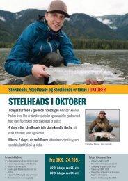Oktober Steelheads i Kitimat, Skeena, Kalum mm
