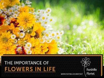 Importance of Flower in Our Life Explained By Calgary Florists