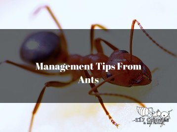 Management tips from Ants