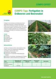 COMPO Tipp: Fertigation in Erdbeeren und ... - COMPO EXPERT
