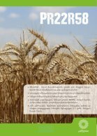 wheat - Page 3