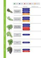 ვაზის დაცვის სქემა - გურჯაანი - Page 2