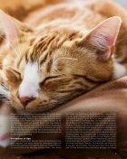 Alles für mein Tier 01/18 - Page 7