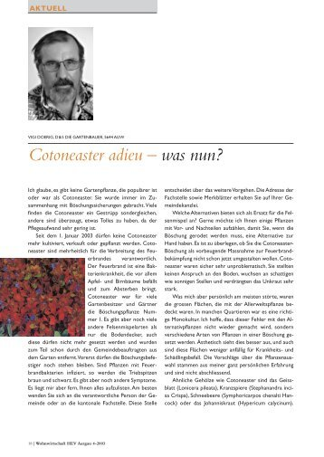 Cotoneaster adieu – was nun? - D&S Die Gartenbauer AG