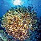 Korallenriffwissen - Page 2
