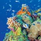 Korallenriffwissen - Page 4