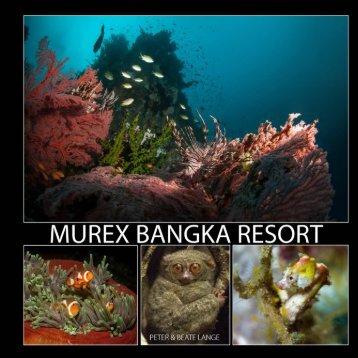 Murex_Bangka 2018