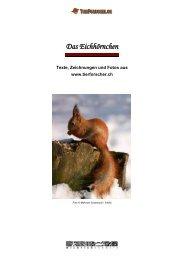 Das Eichhörnchen - Tierforscher