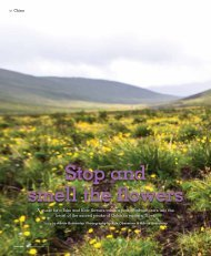 Stop and smell the flowers: An expedition to the sacred peaks of Golok, eastern Tibet