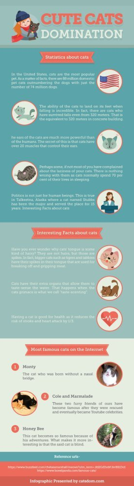 Things About Cats You Should Know